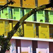 Maior ONG de cuidado animal do Brasil fica no ABC
