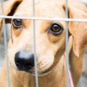 Entra em vigor no estado a Lei que obriga os Pet Shops a colocarem cartazes incentivando a adoção de animais