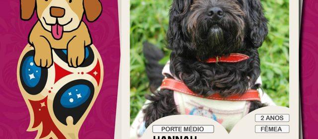Prefeitura promove feira de adoção de cães neste domingo (1)