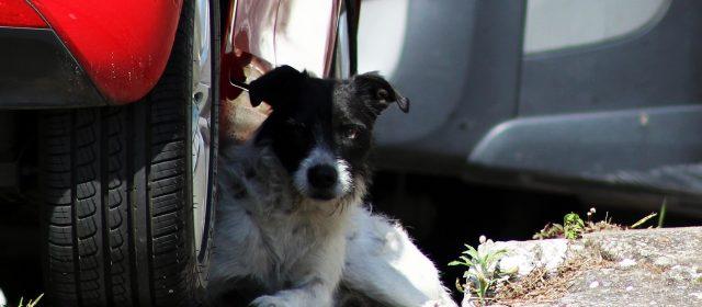 Projeto de lei garante proteção e cuidados aos animais comunitários