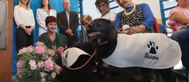 Projeto Dr. Au-legria promove interação entre cães e idosos e incentiva adoção